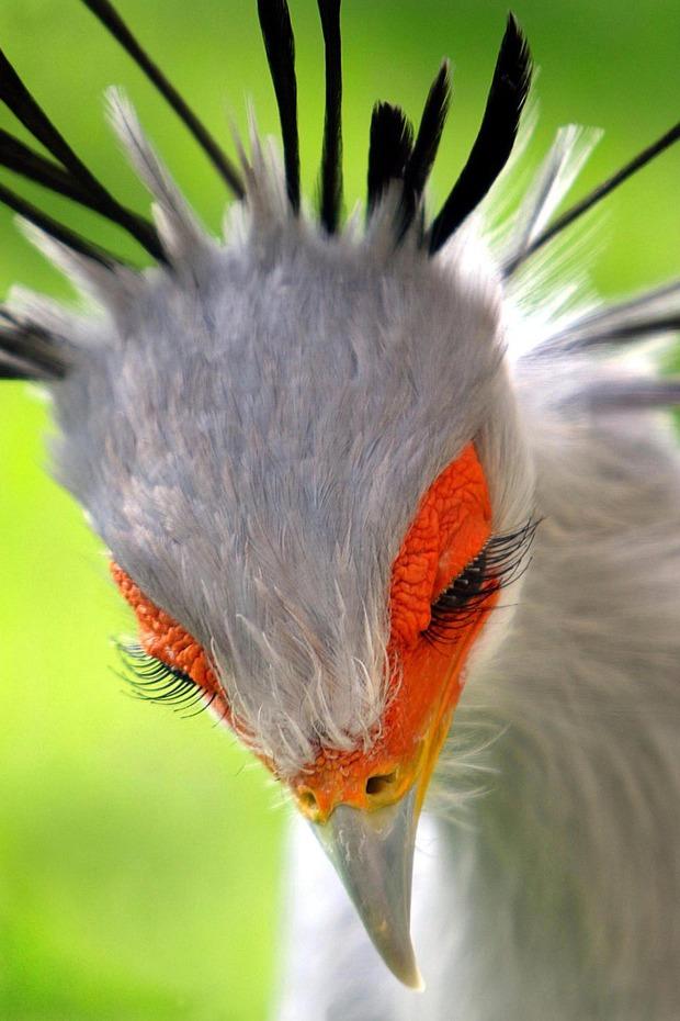 【画像】色っぽい鳥が発見される