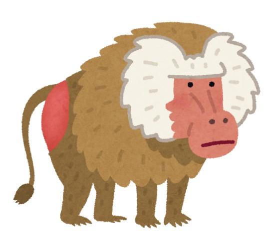 「サルのお尻が赤い。虐待されたのでは?」相次ぐ苦情に動物園困惑