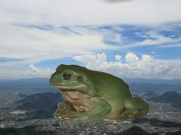 【速報】明らかに合成っぽい巨大カエルが発見される