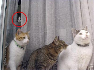 ネコは飼い主のことを「デカいネコ」だと思っているらしい。一方犬「え?俺犬なの?」