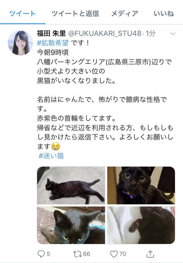 【炎上】AKBメンバー「うちの猫が行方不明になりました。拡散して!」 批判殺到 ←というスレ