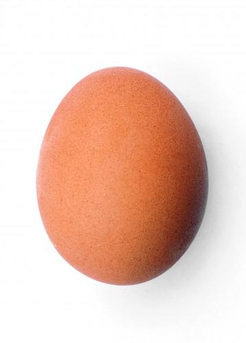 卵は1日一個ルールの家庭で育った奴