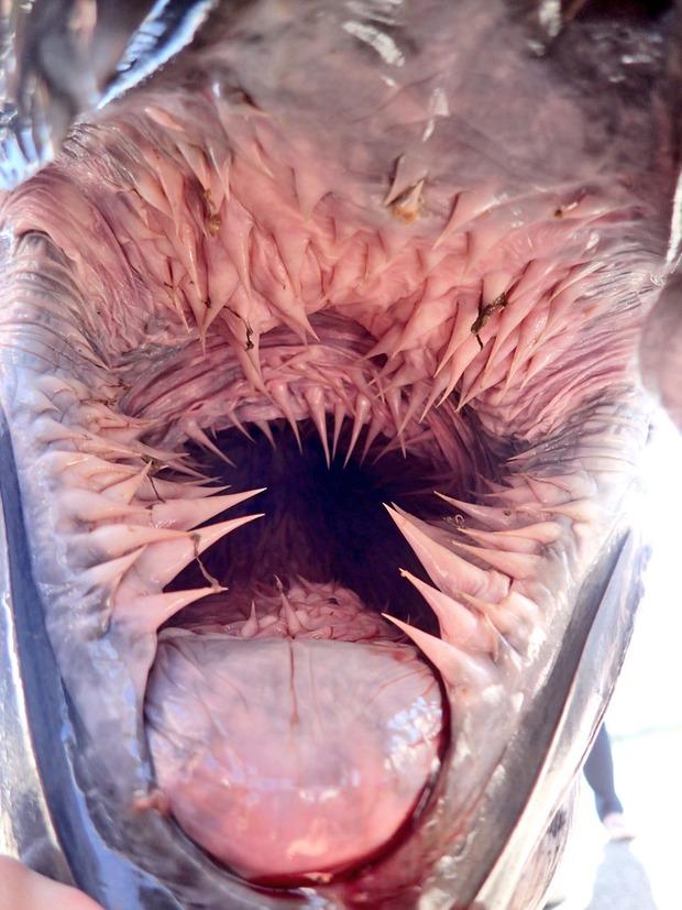 ウミガメの口の中、凶悪すぎてワロタwwwwwwwww