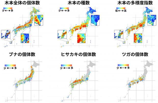 日本の木は210億本 ビックデータで推定