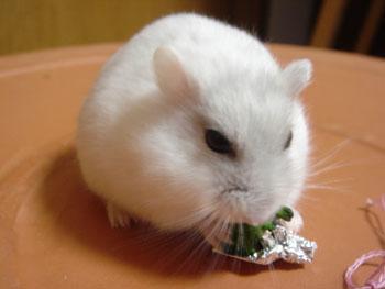 花束食べる