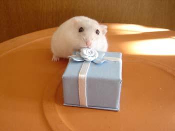 ラピからのプレゼント