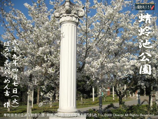 4/7(火)【蜻蛉池公園】岸和田市の立派な総合公園・蜻蛉池公園の桜の写真を撮りました! @キャツピ&めん吉の【ぼろくそパパの独り言】      ▼クリックで元の画像が拡大します。
