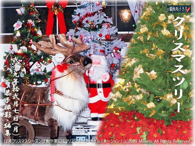 12/7(月)【クリスマスツリー】12月クリスマスシーズンは街や家にはクリスマスツリーやイルミネーション! (c)2009 KyokoF. All Rights Reserved.@キャツピ&めん吉の【ぼろくそパパの独り言】▼マウスオーバー(カーソルを画像の上に置く)で別の画像に替わります。    ▼クリックで1280x960画像に拡大します。
