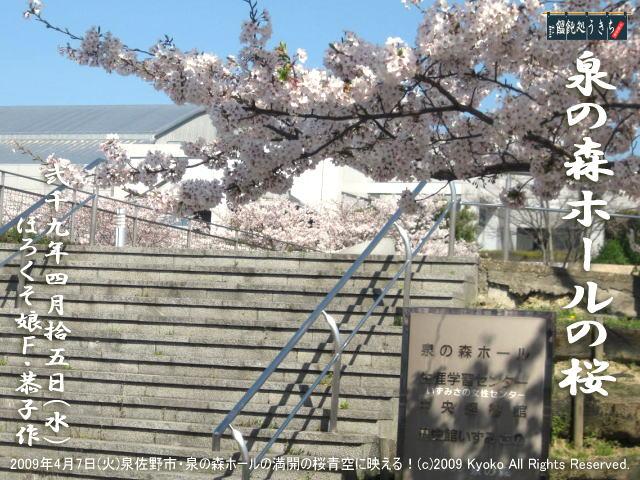 4/15(水)【泉の森ホールの桜】2009年4月7日(火)泉佐野市・泉の森ホールの満開の桜青空に映える! @キャツピ&めん吉の【ぼろくそパパの独り言】      ▼クリックで元の画像が拡大します。
