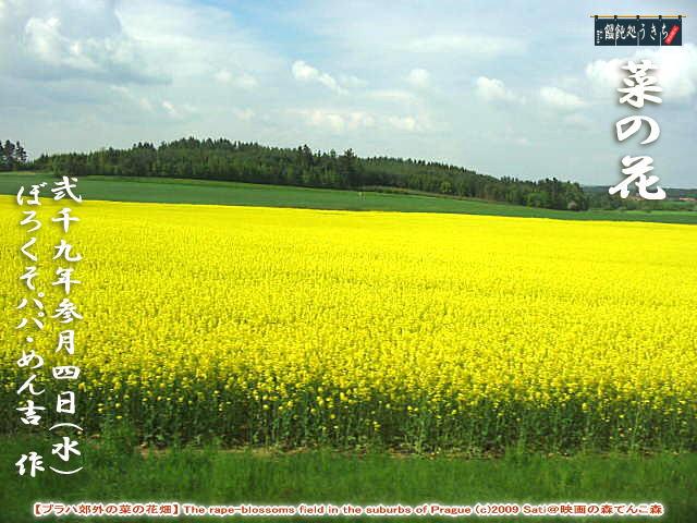 3/4(水)菜の花【プラハ郊外の菜の花畑】 The rape-blossoms field in the suburbs of Prague (c)2009 Sati@映画の森てんこ森@キャツピ&めん吉の【ぼろくそパパの独り言】       ▼クリックで拡大します。