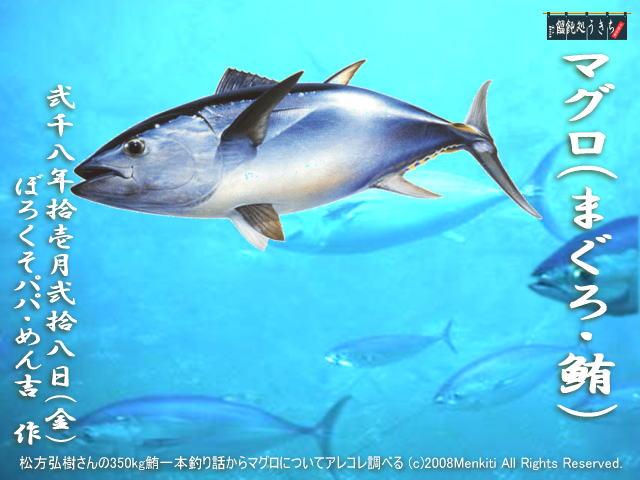松方弘樹さんの350kg鮪一本釣り話からマグロについてアレコレ調べる@キャツピ&めん吉の【ぼろくそパパの独り言】       ▼クリックで拡大します。