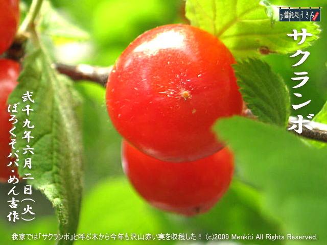 6/2(火)【サクランボ】我家では「サクランボ」と呼ぶ木から今年も沢山赤い実を収穫した! @キャツピ&めん吉の【ぼろくそパパの独り言】 ▼マウスオーバー(カーソルを画像の上に置く)で別の画像に替わります。     ▼クリックで1280x960画像に拡大します。