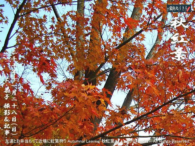 11/28(日)【秋紅葉】友達とお弁当もって近場に紅葉狩り Autumnal Leaves「秋紅葉」! (c)2010 coda21. All Rights Reserved.@キャツピ&めん吉の【ぼろくそパパの独り言】▼マウスオーバー(カーソルを画像の上に置く)で別の画像に替わります。    ▼クリックで1280x960画像に拡大します。