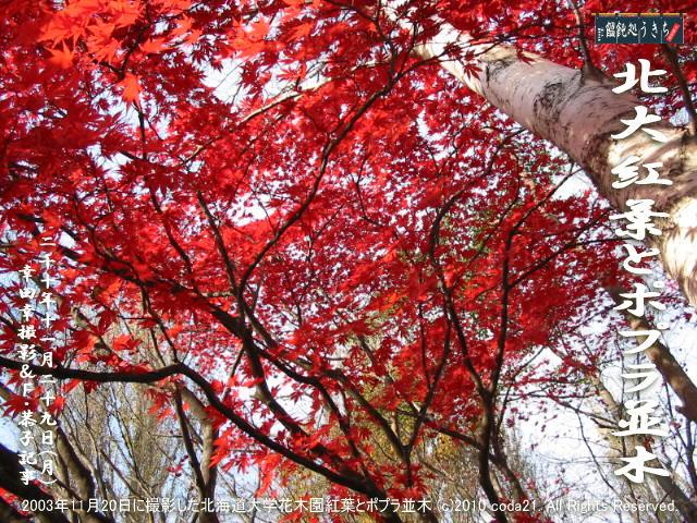11/29(月)【北大花木園紅葉とポプラ並木】2003年11月20日に撮影した北海道大学花木園紅葉とポプラ並木 (c)2010 coda21. All Rights Reserved. @キャツピ&めん吉の【ぼろくそパパの独り言】      ▼クリックで元の画像が拡大します。