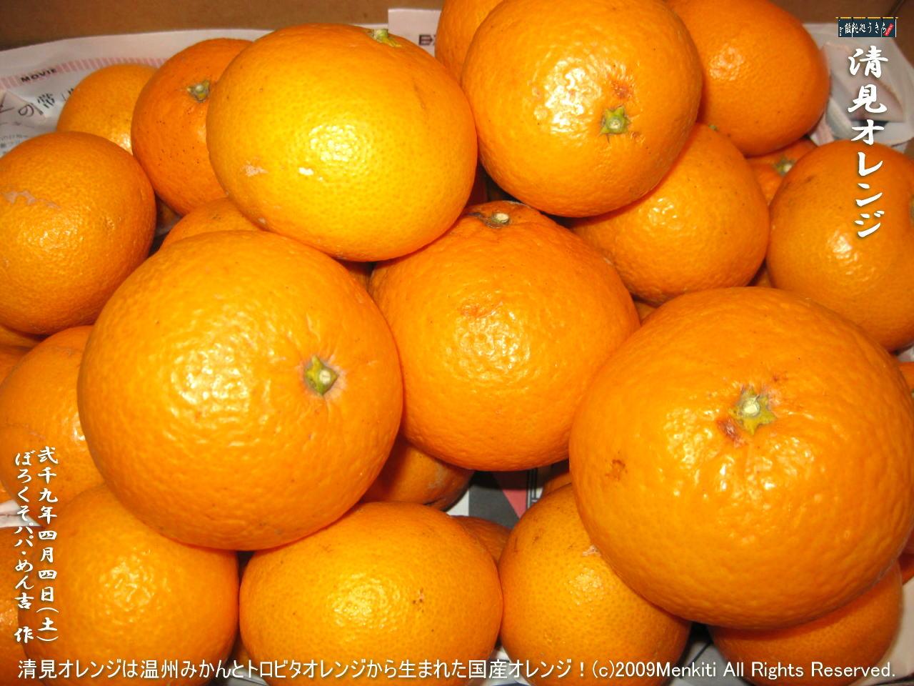 4/4(土)【清見オレンジ】清見オレンジは温州みかんとトロビタオレンジから生まれた国産オレンジ!@キャツピ&めん吉の【ぼろくそパパの独り言】    ▼クリックで1280x960pxlsに拡大します。