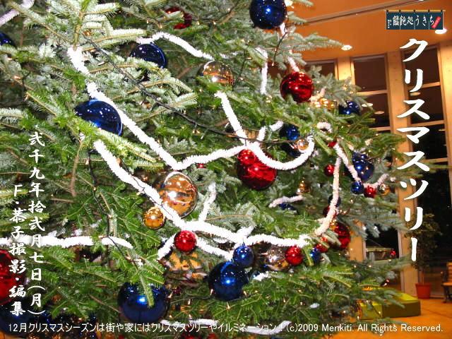 12/7(月)【クリスマスツリー】12月クリスマスシーズンは街や家にはクリスマスツリーやイルミネーション! (c)2009 KyokoF. All Rights Reserved. @キャツピ&めん吉の【ぼろくそパパの独り言】     ▼クリックで元の画像が拡大します。