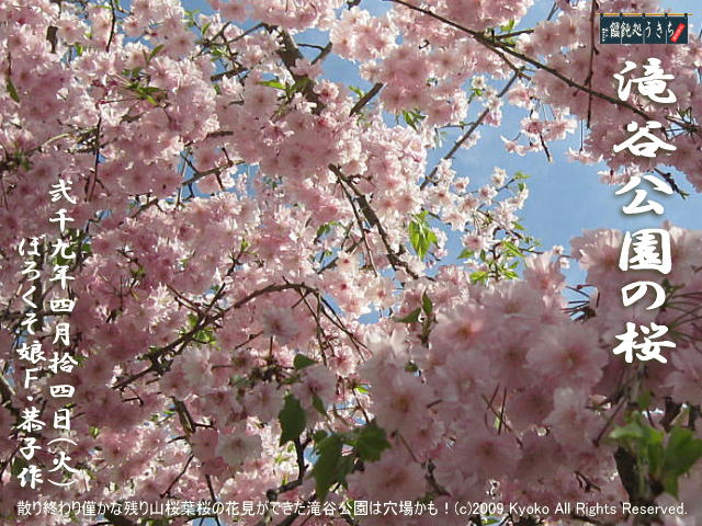 4/14(火)【滝谷公園の桜】散り終わり僅かな残り山桜葉桜の花見ができた滝谷公園は穴場かも! @キャツピ&めん吉の【ぼろくそパパの独り言】      ▼クリックで元の画像が拡大します。