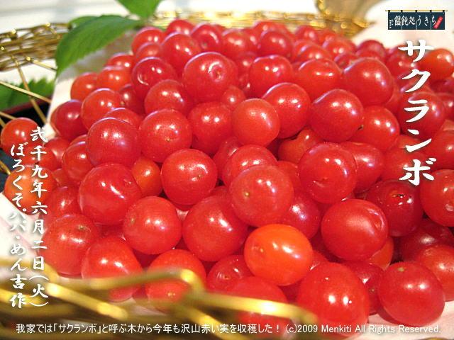 6/2(火)【サクランボ】我家では「サクランボ」と呼ぶ木から今年も沢山赤い実を収穫した! @キャツピ&めん吉の【ぼろくそパパの独り言】     ▼クリックで元の画像が拡大します。
