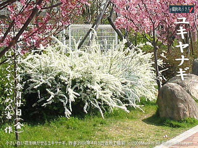3/20(金)【ユキヤナギ】小さい白い花を咲かせるユキヤナギ、昨年2008年4月3日近所で撮影@キャツピ&めん吉の【ぼろくそパパの独り言】      ▼クリックで元の画像が拡大します。