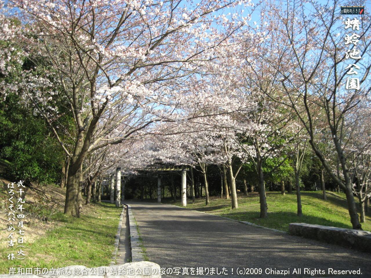 4/7(火)【蜻蛉池公園】岸和田市の立派な総合公園・蜻蛉池公園の桜の写真を撮りました!@キャツピ&めん吉の【ぼろくそパパの独り言】    ▼クリックで1280x960pxlsに拡大します。