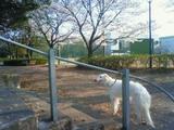 NEC_0082