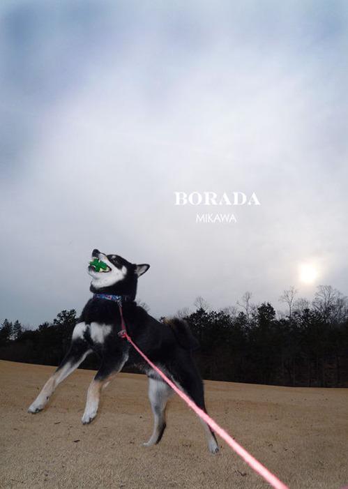 borada
