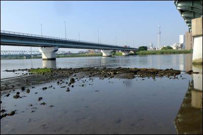 170708-ハゼ釣り2017_荒川四ツ木橋001