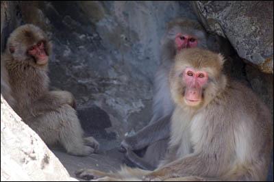 170505-上野動物園007