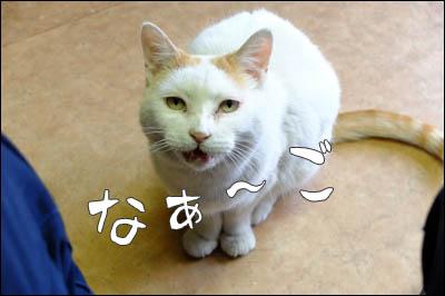 170620-元のらのミーさん003