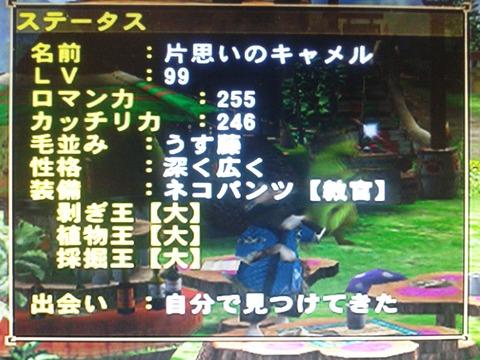 DSC_0867