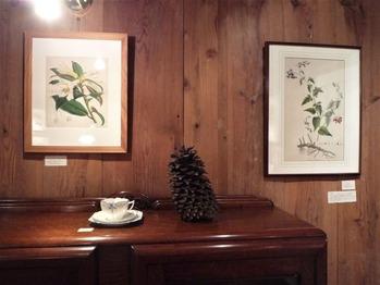 ロンドン植物誌