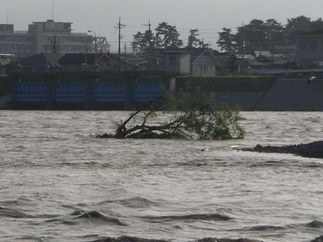 20060719日野川16