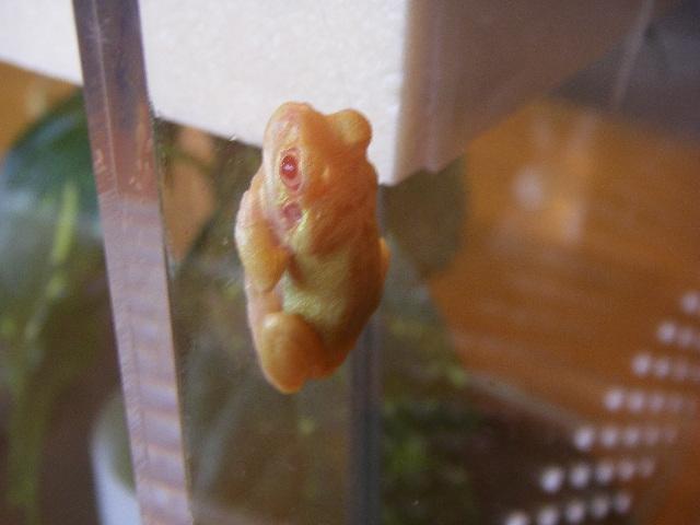 黄色いカエル