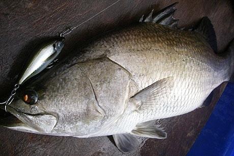 catch-info-263