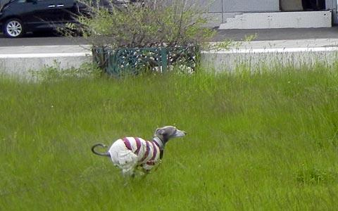 伸びた芝も気にならない様子