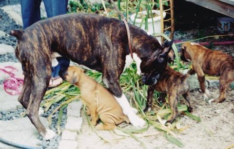 breeding4