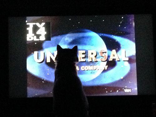 一日中テレビ見る仕事してるけど質問ある?