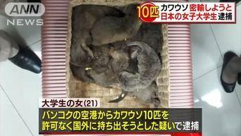 「可哀想だったから」 カワウソ10匹密輸しようとした日本の女子大学生逮捕 タイで3万円で購入