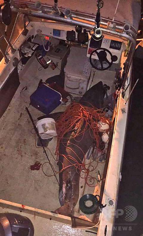 ホホジロザメがボートに飛び乗る、乗っていた漁師は無事に生還(画像あり)