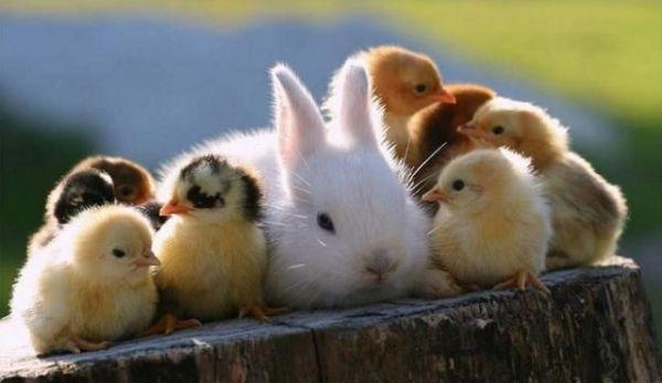 もふもふしてる可愛い動物を見て和むトーク