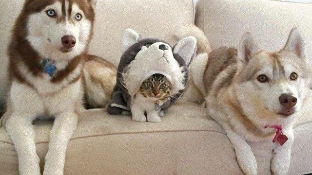 見つけられるかな?動物時々ヒト。日常の生活に溶け込む動物たちの擬態。
