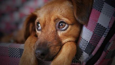 【悲報】犬さん、ストーブに近づきすぎた結果wwwwwww(※画像あり)