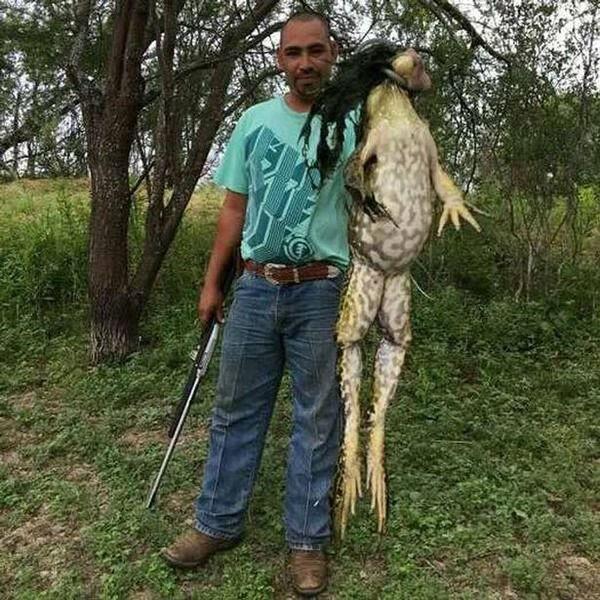【閲覧注意】体重6キロの巨大カエルがアメリカで発見される!写真も本物であると判明!