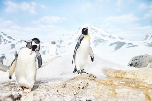 【速報】グレタ、正しかった 南極大陸で史上初の気温20℃越え