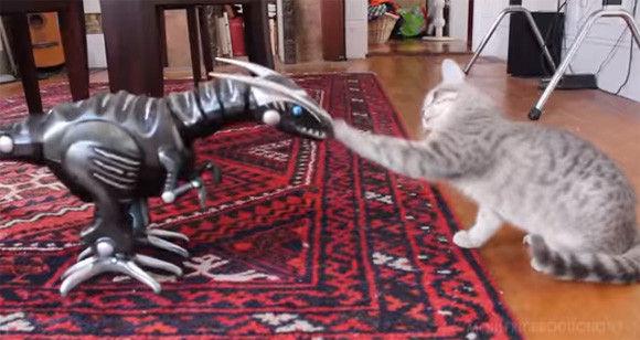 なんだこいつたいしたことねぇじゃん。最初ビビってた恐竜ロボに対し猫が横柄な態度をとるようになるまでの記録映像
