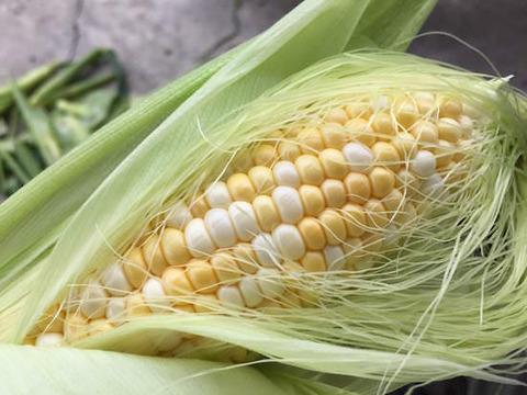 a_corn_top
