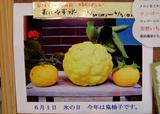 oniyuzu2