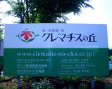 clematis10