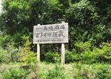 shimazaki9