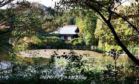 6-blog-ryuanji03iおしどり池(鏡容池)